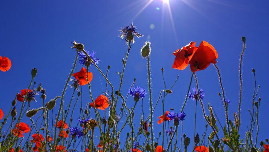 mak-sunčano-proleće-vreme
