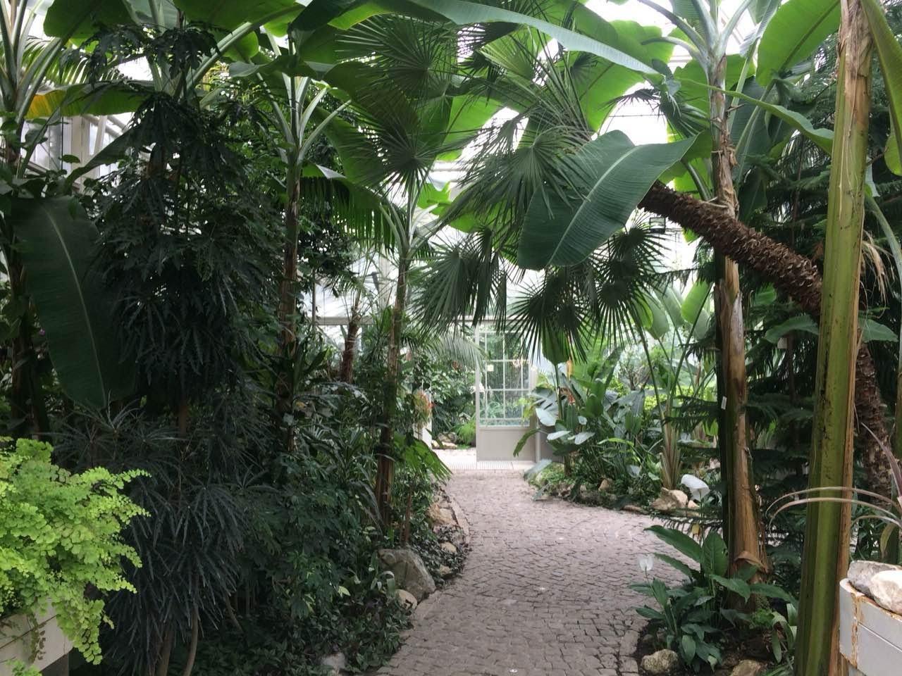 Botanička bašta Jevremovac, zaboravljeni raj u centru Beograda Botani%C4%8Dka-ba%C5%A1ta-jevremovac-beograd-9