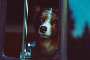 pas-autobus-ljubimac-ljubimci-kuče