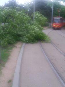 košava-vetar-grane-drveće-crkva-svetog-marka