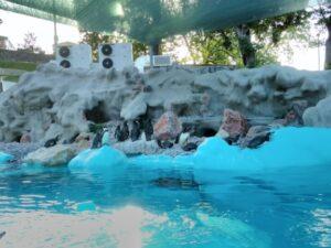 pingvini-beo-zoo-vrt
