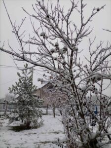 sneg-beograd-zima-januar-2021-2