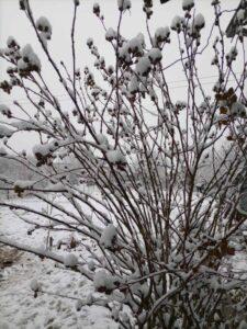 sneg-beograd-zima-januar-2021-3